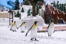 Ski Dubai wins 'World's Best Indoor Ski Resort' for the fifth consecutive year