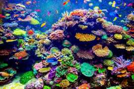 Major coral reef garden project launched in Fujairah
