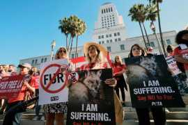 Los Angeles becomes the largest city to ban sales of fur
