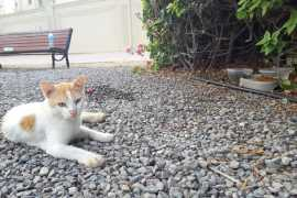 Save Gussy: cat abandoned at Abu Dhabi bus stop waits months for owners to return